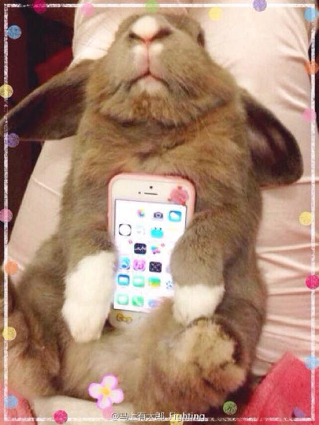 55213819446d Najnovšia móda z Japonska  Živé zvieratá ako kryt na telefón