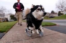 Tento psík behá vďaka labkám, ktoré mu vyrobila 3D tlačiareň