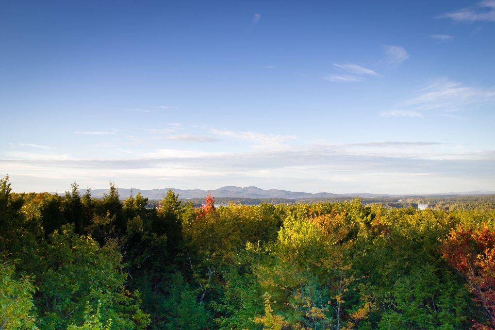 mountains-trees-fall-foliage