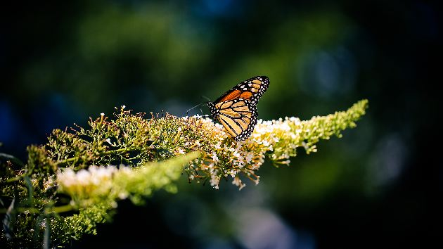 nature-outdoors-butterfly-letsexplore